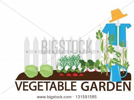 vegetable garden vegetable beds a scarecrow and garden tools vector illustration