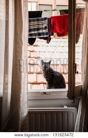 Cat on a window with hanged cloths