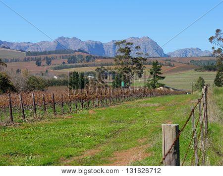 Grape Farm, Stellenbosch  Cape Town South Africa