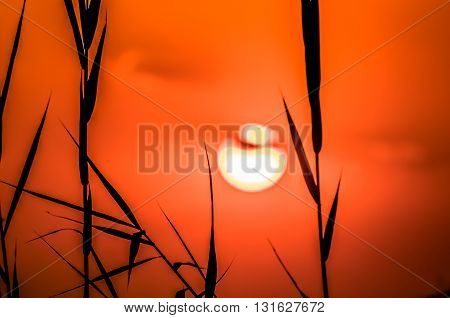 A sun setting in the red orange sky of the Okavngo Delta behind some silhouetted reeds.