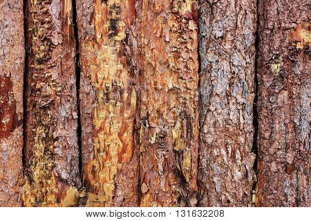 The pine wood fence as a background