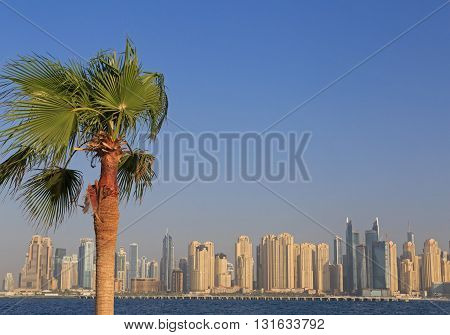 view on palm tree over cityscape of Dubai