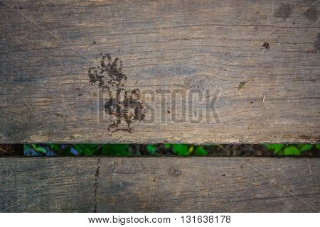 Wet dog paw print on the wooden bridge