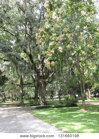 Treed Pathways in the Park in Savannah