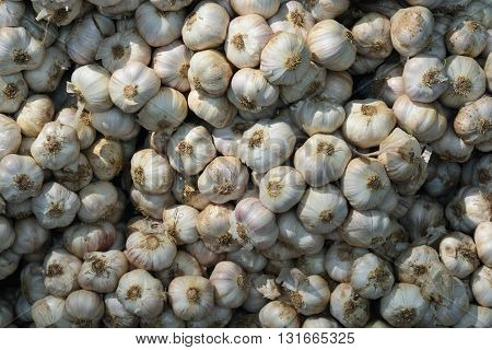 Garlic on market, a lot of garlic