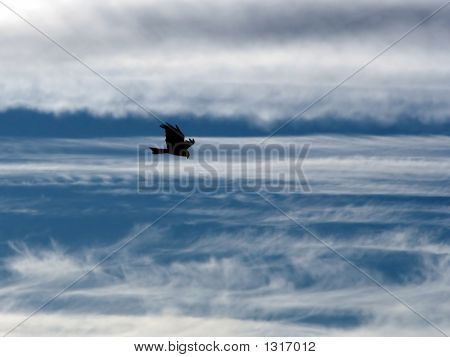 the eagle soaring in the sky among clouds. poster
