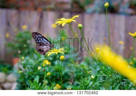 Close up of butterfly seeking nectar on a flower in garden.