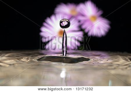 Daisy Refraction In Water Drop