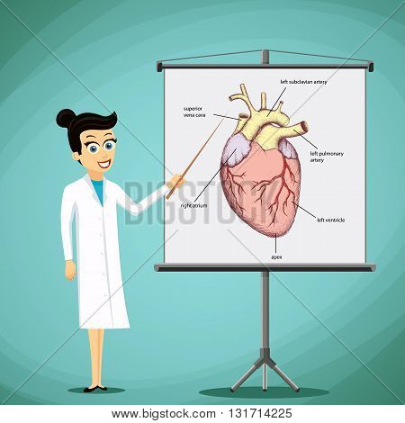 Doctor shows on a blackboard image with a human heart. Organ Anatomy. Stock vector illustration.