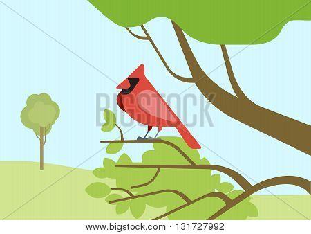 Cardinal red bird on tree branch flat cartoon vector wild birds