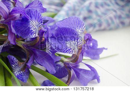 Iris flower. Bouquet of iris. Petals of a flower of an iris. Purple iris close-up.