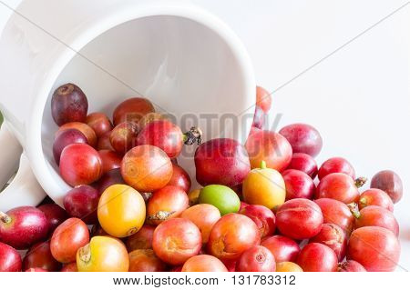 fresh raw coffee beans on white background
