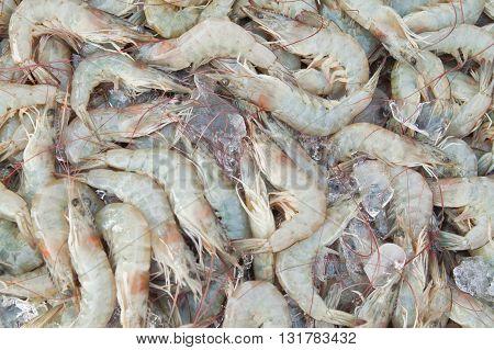 Fresh shrimps at seafood market East of Thailand