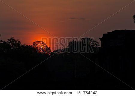 Sunrise from behind the treelike at Angkor Wat