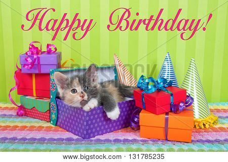two month old calico tabby kitten peeking out of birthday present in a pile of brightly colored boxes with party hats bright green stripped background with Happy Birthday text