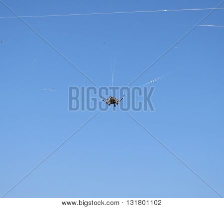 Spider on a web in front to blue sky