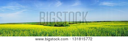 Wonderful panorama of rapefield by springtime. Nice view.