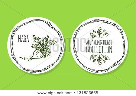 Ayurvedic Herb Collection. Handdrawn Illustration - Health and Nature Set. Natural Supplements. Ayurvedic Herb - Label with Maca