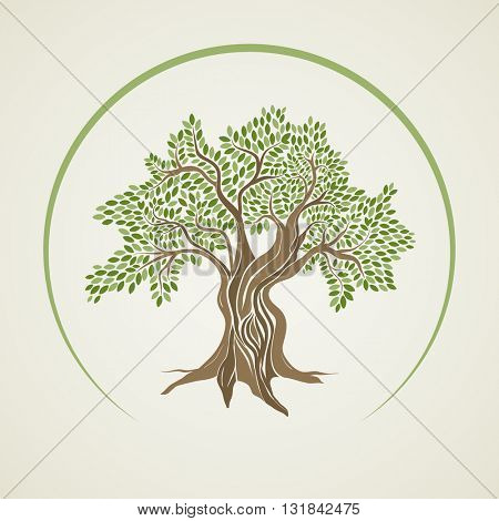 Retro style olive tree vector illustration.