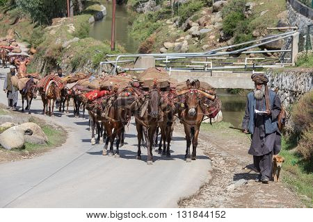 SRINAGAR INDIA - JUNE 09 2015: Unidentified Indian muslim men and caravan of horses in Srinagar Kashmir India.
