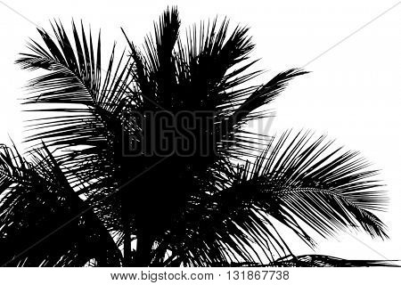 Silouette of beautiful palms leaves, isolated on white