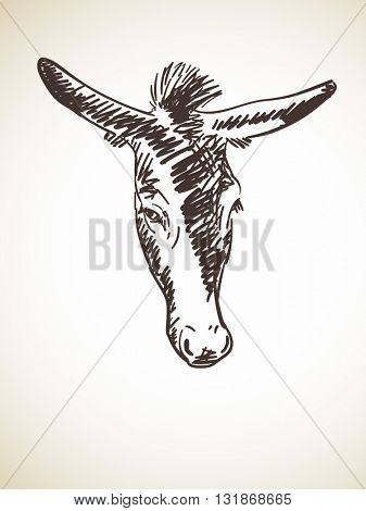 Sketch of donkey's head, Hand drawn illustration