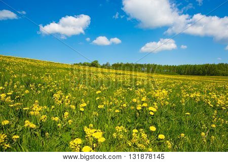 Rural views to the flower meadow and the blue sky. Pastoral panorama of nature summer. Undulating terrain in the style of the Window. Field with yellow dandelions.