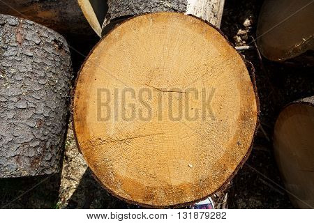 Round slice of tree trunk pine. Background and texture of wood. Rings of a tree trunk. Felled tree trunks in a pile. Logs in the countryside. Logging in the village.