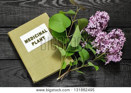 Medicinal plant lilac (Syringa) and herbalist handbook. Used in herbal medicine and for the preparation of cosmetics and perfumery