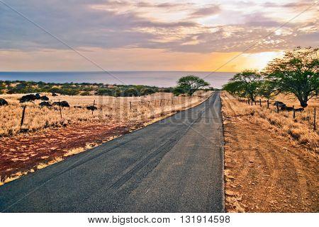 Road to sunset ocean. Big island. Hawaii