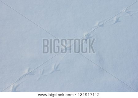 Bird footprints on clean white snow on a frosty winter day