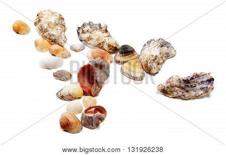 Seashells Isolated On White Background