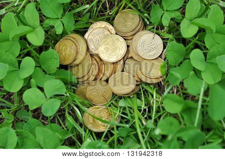 golden coins in green spring clover leaves
