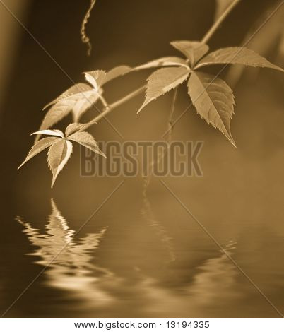 Autumn leaves reflected in rendered water (toned in sepia)