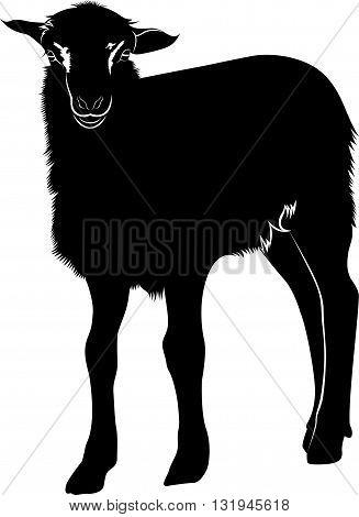 lamb. Farm animals lamb. Animal lamb. The animal farm lamb black silhouette isolated on white background.