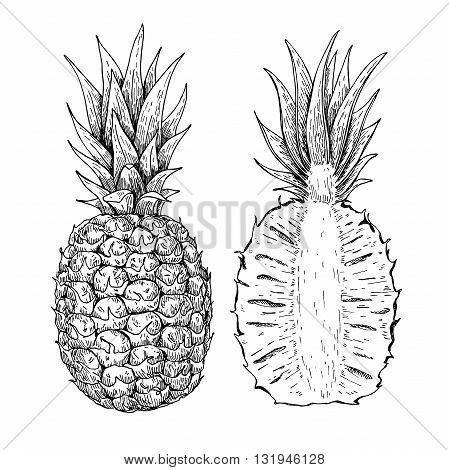 Vector hand drawn pineapple and sliced pieces set. Tropical summer fruit engraved style illustration. Detailed food drawing. Great for label poster print