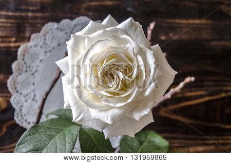 Scorched boards with one disclosed white rose