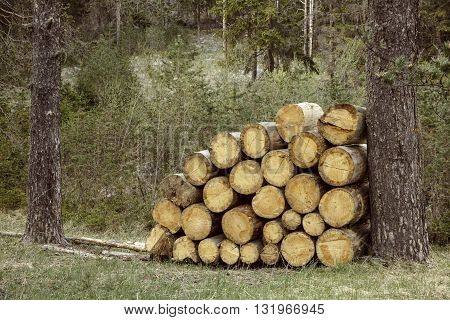 Woodpile of big pieces of cut timber wooden trunks in a forest setting. Forestry industry natural conservation sustainable energy resources concept