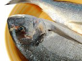 close-up of a gilthead bream ready to be cooked poster