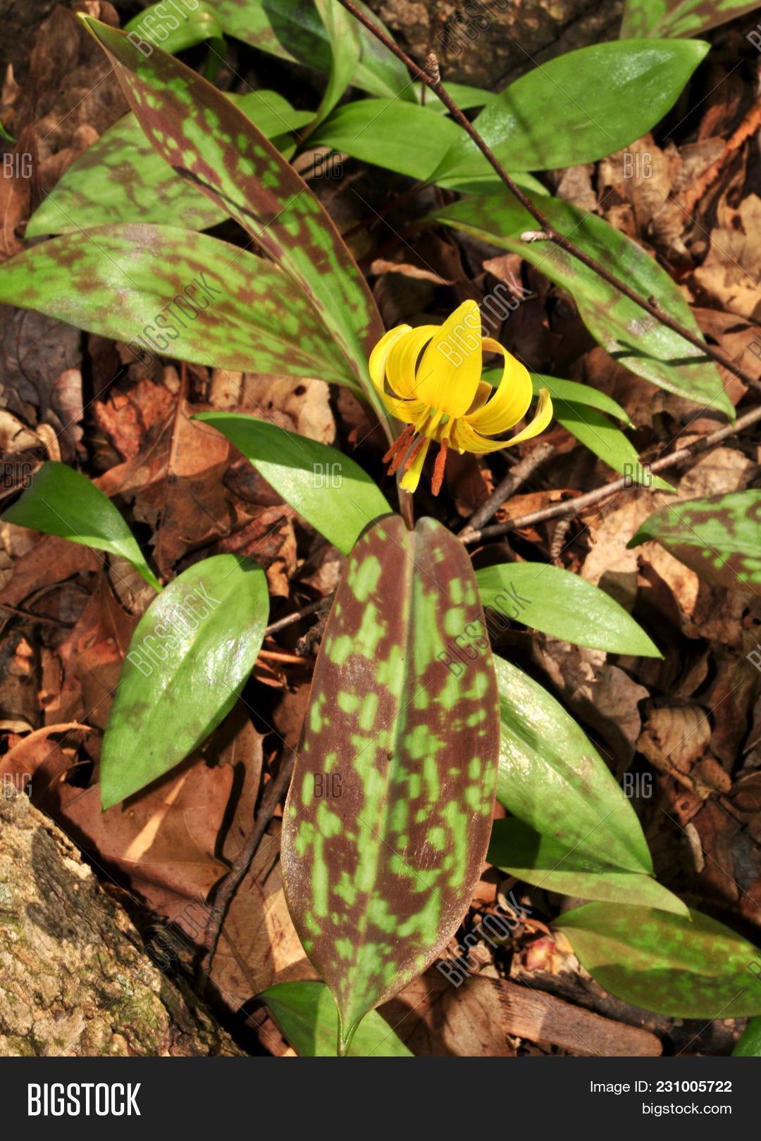 Bright Yellow Flower Image Photo Free Trial Bigstock