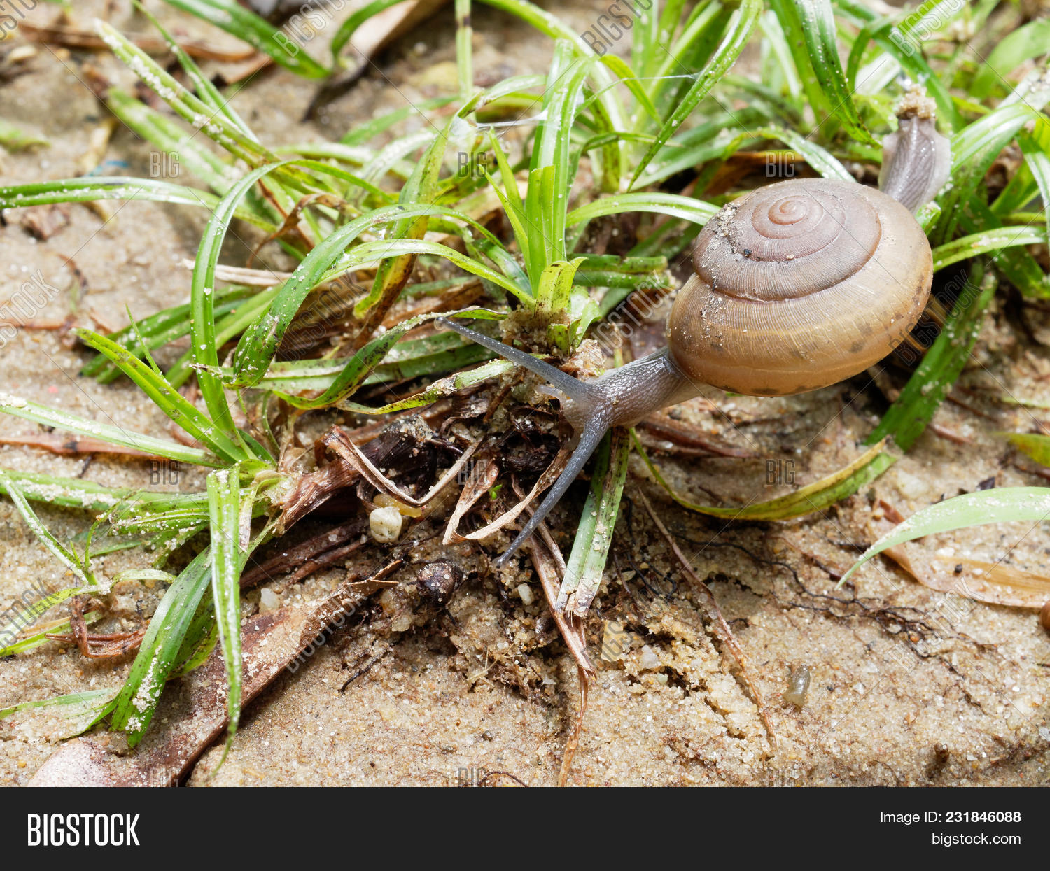 Brown Snail, Which Image & Photo (Free Trial) | Bigstock