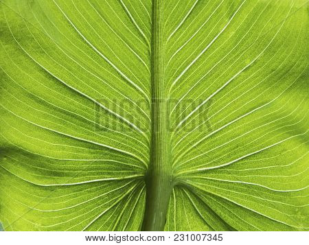 Green Textural Sheet Of Tropical Indoor Plants, Macro, Vertical Placed Illuminated
