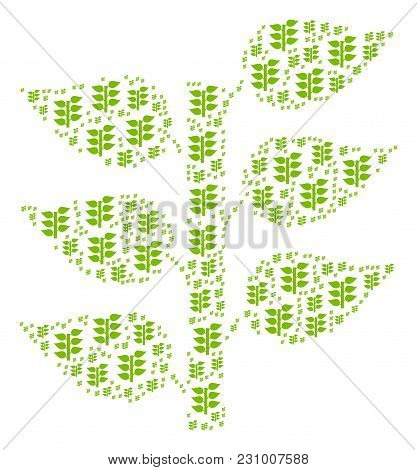 Flora Plant Illustration Combined In The Combination Of Flora Plant Icons. Vector Iconized Collage M