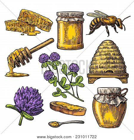 Honey Set. Jars Of Honey, Bee, Hive, Clover, Spoon, Bee, Bread And Honeycomb. Vector Vintage Color E