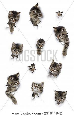 Cats In Holes Of Paper, Little Grey Tabby Kittens Peeking Out Of Torn White Background, Eleven Funny