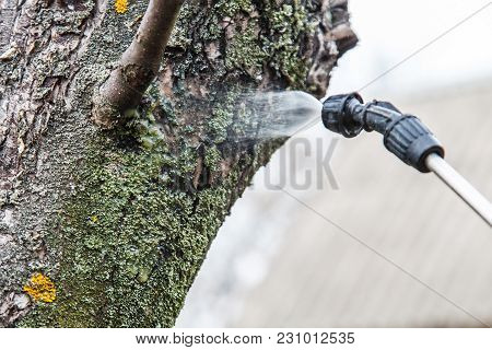 Sprinkling Of Trees With Iron Vitriol