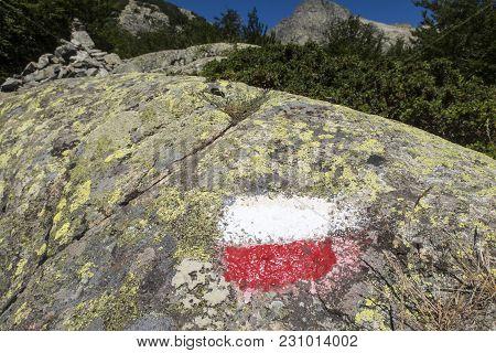 Closeup Of A Marking On A Rock