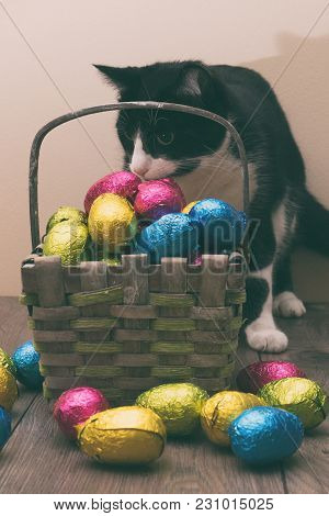 Cat Behind A Straw Basket Filled With Easter Chocolate Eggs Wrapped In Colorful Tinfoil On Top Of A
