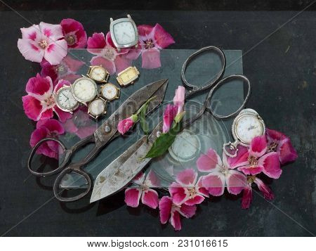 Art Still Life Of Two Old Black Metal Scissors, Red Small Flowers And Numerous Wristwatches On A Bla