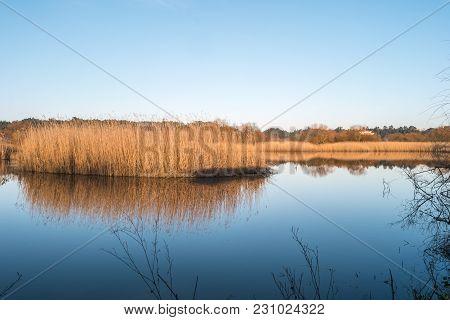 Beautiful Lagoon Park Of Pateira De Fermentelos, Portugal.